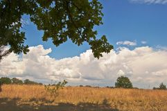 Relax from the heat in the shade of a solitary oak tree. A lone tree is an oasis of cool shade in the hot steppe. Relax from the heat in the shade of a solitary stock images