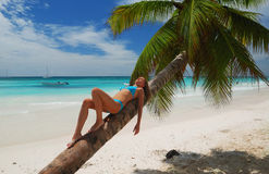 Relax on palm Royalty Free Stock Images