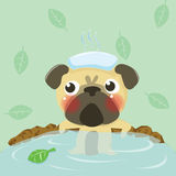 Relax pug Stock Photo
