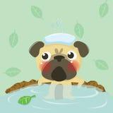 Relax pug Stock Photo