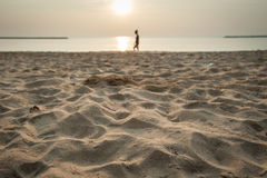Relax que anda no Sandy Beach molhado durante o por do sol Fotografia de Stock