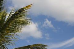 Relax que olha um céu azul e as folhas da palmeira em Isla Mujeres imagens de stock royalty free