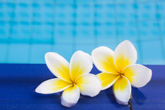 Relax and Spa. Frangipani flower on the pool,concept for Relax and Spa Stock Photos