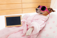 Relax spa wellness dog Royalty Free Stock Photos