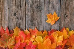 Relax time in fall season. Red maple leaf on table royalty free stock photography