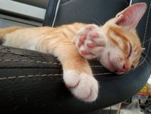 Relax time. Kitten sleep on chair. Stock Photos