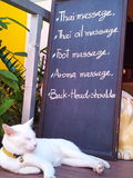Relax time. White cat in front of the massage shop in Thailand Stock Photo