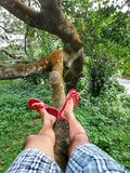 Relax on the tree hollyday. Same Relaxing time on the tree in my bed location srilanka stock photo