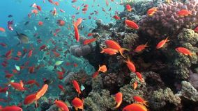 Relax underwater Red sea. Video about marine nature of beautiful lagoon stock footage