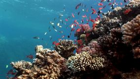 Relax underwater Red sea. Video about marine nature of beautiful lagoon stock video