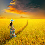 Relax woman in rice field and raincloud sunset Royalty Free Stock Image