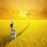 Relax woman in yellow rice field and Sunset Stock Photography