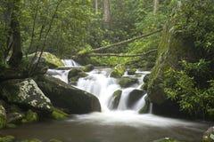 Relaxamento cênico em Great Smoky Mountains Fotografia de Stock