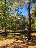 Relaxamento em uma rede nas madeiras imagem de stock royalty free