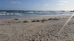 Relaxamento na baía do selo Fotografia de Stock Royalty Free