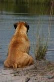 Relaxamento na lagoa Imagens de Stock
