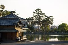 Relaxando por um lago em Nara, Jap?o imagem de stock royalty free