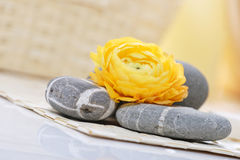 Relaxation. Rannunculus on pebbles, beauty therapy and relaxation Stock Image