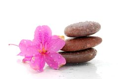 For relaxation. Spa stones and wet flower Royalty Free Stock Image