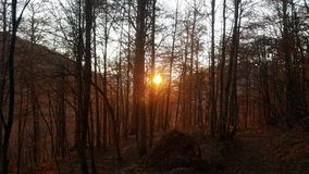 Forest. The sun. Nature. royalty free stock image
