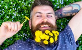 Relaxation concept. Guy with dandelions in beard relaxing, top view. Bearded man with dandelion flowers in beard lay on. Meadow, grass background. Man with Stock Photo