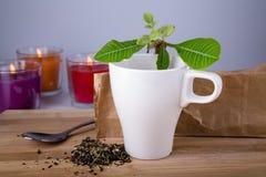 Relaxation de thé Photographie stock