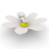 Relaxation on flower Royalty Free Stock Images