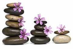 Relaxation with flowers and stones. Stock Photography