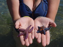 Relaxation. Girl is holding starfishes in hands Stock Photography