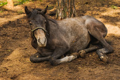 Relaxation horse Stock Photography