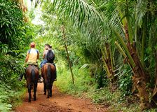 relaxation horse ride in the valley of Vinales royalty free stock photos