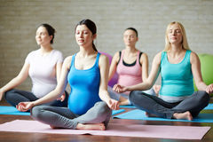Relaxation. Several pregnant women practicing yoga in gym Stock Images