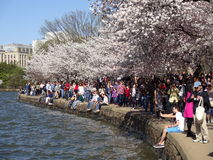 Relaxation at the Tidal Basin Royalty Free Stock Photo