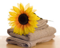 Relaxation Time Royalty Free Stock Photo