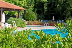 Relaxation zone with greenery and swimming pool Royalty Free Stock Image