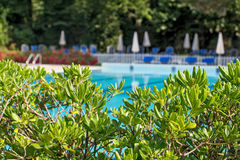 Relaxation zone with greenery and swimming pool Stock Photo
