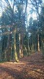 Relaxe na floresta Fotografia de Stock Royalty Free
