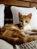 Relaxe o gato foto de stock royalty free