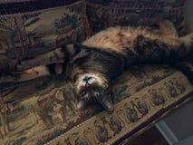 Relaxe o gato Imagens de Stock Royalty Free