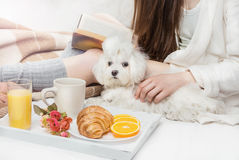 Relaxed calm weekrnd morning. Breakfast on the bed with interestimg book and small cute pup maltese. Relaxed calm weekrnd morning Royalty Free Stock Photography