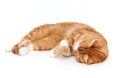 Relaxed cat Royalty Free Stock Photography
