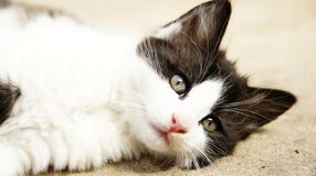 Relaxed Cat. Cat chilling on the ground not caring about anything in the world royalty free stock photos