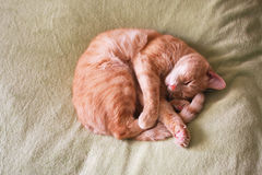 Relaxed cat Royalty Free Stock Photos