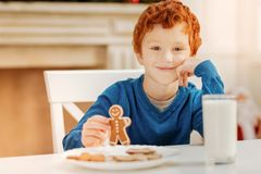 Relaxed curly haired child enjoying christmas breakfast. Favorite season. Charming little boy resting his head on a hand while holding a gingerbread man and Stock Photography