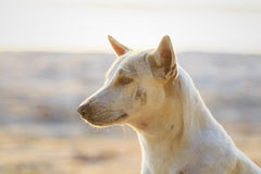 Relaxed dog on the beach sand Stock Photography