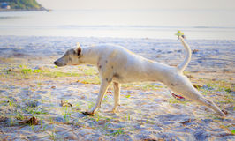 Relaxed dog on the beach sand Royalty Free Stock Images