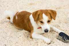 Relaxed dog on the beach sand Stock Image