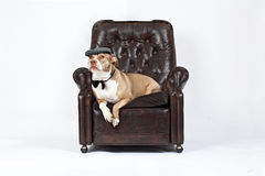 Relaxed dog in a chair. A dog is sitting on a chair with a hat stock photos