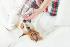 Relaxed dog playing Royalty Free Stock Images
