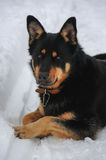 Relaxed dog in the snow Stock Images